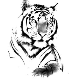 Used this for James' Tiger Tattoo Aztec Tattoo Designs, Gemini Tattoo Designs, Tiger Tattoo Design, Retro Tattoos, Trendy Tattoos, Cute Tattoos, Tattoos For Guys, Tigre Tribal, Zwilling Tattoo