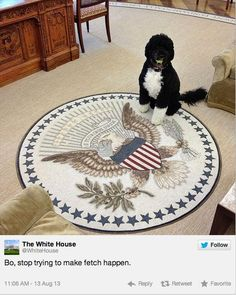 The presidential dog | As 100 fotos caninas mais importantes de todos os tempos