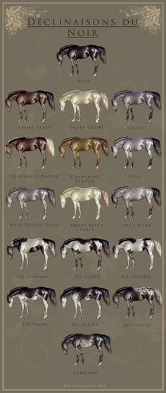 Black horses and variations - illustration from Robes & Genetique des Chevaux
