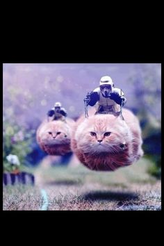 Star Wars Speeder Bike Cats I laughed WAAAY too hard at this Star Wars Meme, Funny Cats, Funny Animals, Cute Animals, It's Funny, Funny Stuff, Funny Humor, Grumpy Cats, That's Hilarious