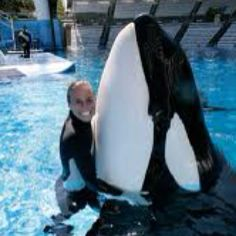 Dawn and Tilikum the whale that killed her