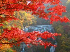 Fukuroda Falls - Ibaraki - Fukuroda Falls - Ibaraki - Japan Travel ...