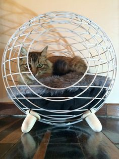 10 Homemade Cat Beds Too Cute to Resist Wire Nest – A handcrafted architectural sphere is perfect for even the most discerning cat. 10 Homemade Cat Beds Too Cute to Resist Homemade Cat Beds, Lit Chat Diy, Niche Chat, Diy Cat Bed, Cat Cave, Cat Room, Pet Furniture, Pet Beds, Cat Design