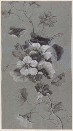 Study of Nasturtiums by Antoine Berjon