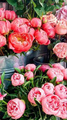White Wedding Flowers, All Flowers, Amazing Flowers, Beautiful Flowers, Blush Peonies, Peonies Bouquet, White Peonies, Where To Buy Peonies, Peonies Delivery