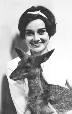 Audrey Hepburn. The animal trainer on set suggested that Audrey take the deer home with her as a pet so they could bond. | Audrey Hepburn Had A Pet Deer Named Pippin