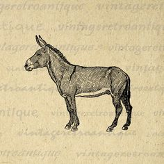 Donkey Graphic Digital Printable Horse Image Download Illustration Vintage Clip Art for Transfers Printing etc HQ 300dpi No.3090 on Etsy, $3.50