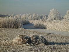Winter at De Belt at national park 'De Wieden'.