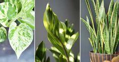 7 tåliga krukväxter som frodas i höstmörkret