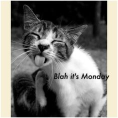 Monday blah cat