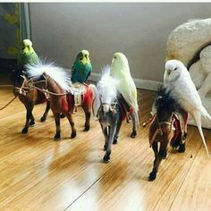 Parakeets on horses