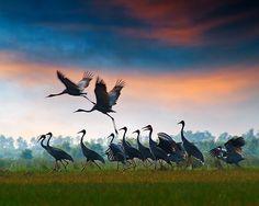 And..... here we go ~ Cranes - hoangnamphoto
