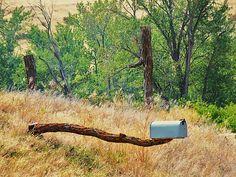 Whitebird, Idaho Mailbox by trueblvr Funny Mailboxes, Home Mailboxes, Letter Boxes, Mail Boxes, Post Box, Snail Mail, Craft Fairs, Idaho, Business Ideas