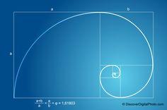 fibonacci spiral images in nature | Fibonacci Sequence | Catphi's Curiosities