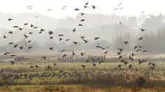 Blakeney Freshes Coastal Wildlife walk, Norfolk   National Trust
