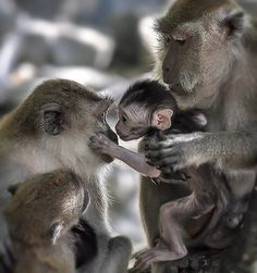 Monkeys With Cute Baby Primates, Mammals, Cute Baby Animals, Animals And Pets, Funny Animals, Beautiful Creatures, Animals Beautiful, Tier Fotos, My Animal