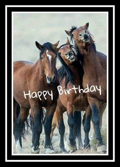 New Ideas Funny Happy Birthday Horse All The Pretty Horses, Beautiful Horses, Animals Beautiful, Beautiful Creatures, Funny Horses, Funny Animals, Cute Animals, Happy Animals, Horse Pictures