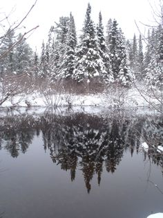 New Years Eve-Algonquin Park