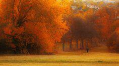 Harrow Hill, England (by Sorin B.)