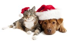 happy people and pets  | Happy and Healthy Holidays | Pathway Saat