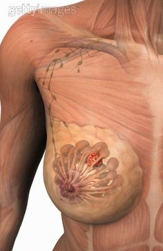 mamografía digital    Diagnostico Especializado por Imagen Jalisco México www.dei.org.mx