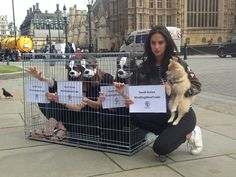 South Korea's #cruel dog meat trade must end, say UK MPs #SouthKorea #dogmeattrade #dogs #LucyWatson #MadeInChelsea