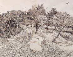 The Olive Trees, Vincent van Gogh. via Jayne's Learning Log: Observations on a Pen and ink drawing by Vincent Van Gogh Van Gogh Drawings, Van Gogh Paintings, Ink Pen Drawings, Drawing Sketches, Tree Drawings, Vincent Van Gogh, Art Van, Van Gogh Zeichnungen, Van Gogh Olive Trees