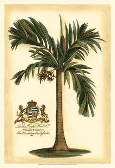 British Colonial Palm Art Print - hmmm...  I've been into British Colonial for a long time; apparently you have too.