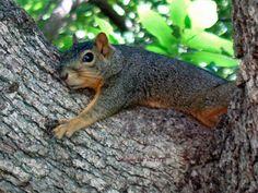 Tree Hugger Squirrel Fine Art Photo   by critterconnection on Etsy, $12.50