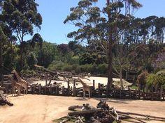 Zoo d'Auckland