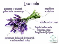 Lawenda Food And Drink, Health Fitness, Herbs, Healthy, Plants, Gardening, Diet, Health, Lawn And Garden