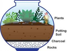 Terrarium for kids. Drawing showing the layers of rocks, charcoal, and soil in the terrarium, along with plants, and a small garden gnome. Terrariums Diy, How To Make Terrariums, Terrarium Plants, Succulent Terrarium Diy, Terrarium Wedding, Indoor Succulent Garden, Small Terrarium, Succulent Soil, Glass Terrarium Ideas