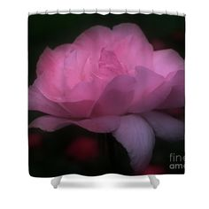 Heavenly pink rose flower in bloom shower curtain.  Photography by Susan.