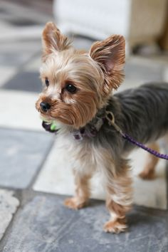 Our Favorite Accessory of 2014- Miss Ellie the Yorkie Pup! Photo by Jennifer Bearden