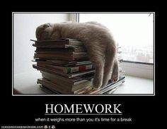 LOL Cats, cats, funny, meme, animals