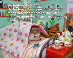 Twenty Incredible Hedgehog Facts That Will Astound You Hedgehog Meme, Hedgehog Facts, Happy Hedgehog, Cute Hedgehog, Animals And Pets, Baby Animals, Funny Animals, Cute Animals, Cute Baby Bunnies