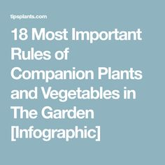 18 Most Important Rules of Companion Plants and Vegetables in The Garden [Infographic]