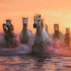 #adoptdontshop #beautiful #beauty #cheval #caballo #dreamhorse #equine #equinephotography #equinesofinstagram #equestrianism #equestrian #equestrianphotography #equestriansofinstagram #equestrianlife #followme #horse #horses #horsesofinstagram #horsestagram #horsephotography #horsebackriding #instahorse #newaccount #pferde #pferd #pferdefotografie #pferdeliebe #pferdemädchen #horsesofig #photography