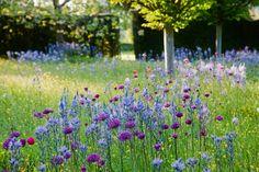 Wildflower Meadow https://www.facebook.com/HighgroveShop/photos/pb.211200028960354.-2207520000.1430537786./821644641249220/?type=3&theater