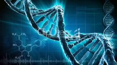 Nutritional Science Category Minotor Energy Endurance