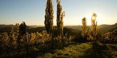 Südsteiermark (South Styria, Austria) Homeland, Austria, Beautiful Places, Mountains, World, Nature, Travel, Beauty, Naturaleza