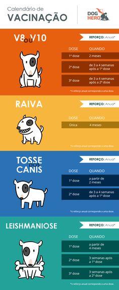 Vacina de cachorro: quais devo aplicar todo ano? Veja o calendário - DogHero for dog lovers <3