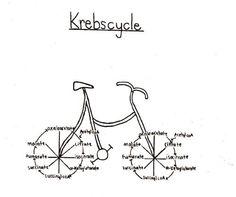The krebs cycle Biology Jokes, Medical Jokes, Biology Lessons, Chemistry Jokes, Ap Biology, Medical School, Science Cartoons, Science Puns, Life Science