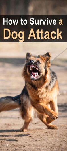 How To Survive A Dog Attack. The vast majority of dogs are friendly and won't attack you, but what will happen if the shit hits the fan? #Urbnsurvivalsite #Dogattack #SHTF