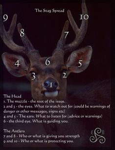 The Stag tarot card spread | divination layout | oracle cards