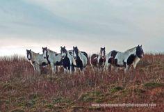 """""""Ponies On Birkett, Mallerstang"""""""