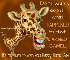 Hump day Wednesday Greetings, Wednesday Hump Day, Wednesday Sayings, Wednesday Coffee, Quotes Friday, Wacky Wednesday, Friday Drinking Quotes, Funny Drinking Quotes, Cute Good Morning Images