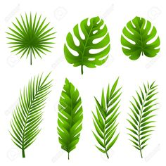Find Jungle tropical palm tree leaves collection stock vectors and royalty free photos in HD.Illustration of Jungle leaves set. Palm Tree Leaves, Tropical Leaves, Tropical Flowers, Palm Trees, Palm Tree Art, Tree Tree, Palm Tree Drawing, Leaf Drawing, Tree Drawings