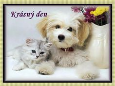 Dogs cats Gifs images and Graphics. Dogs cats Pictures and Photos. Cute Kittens, Cute Cats And Dogs, Cool Pets, Cute Animal Pictures, Dog Pictures, Animals Beautiful, Cute Animals, Art Carte, Gifs