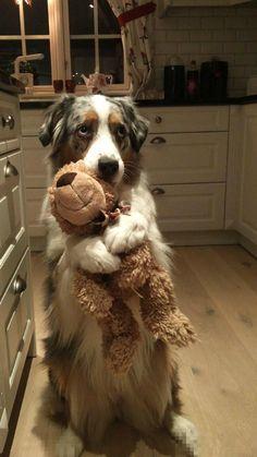 awwww! Cute! — This is my bear. (Source: http://ift.tt/2j2owmd)